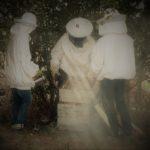 De l'essaim passé devant la maison au miel récolté