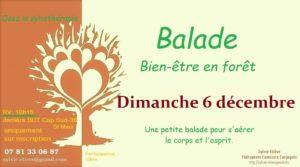 Balade bien-être en forêt : osez la sylvothérapie